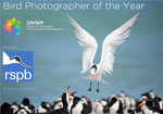 SINWP Bird Photographer of the Year 2020 in aid of RSPB